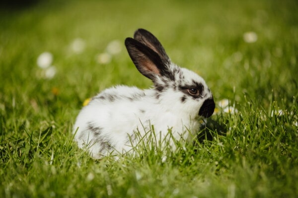 easter, bunny, rabbit, domestic, pet, grass, cute, fur, nature, hay field
