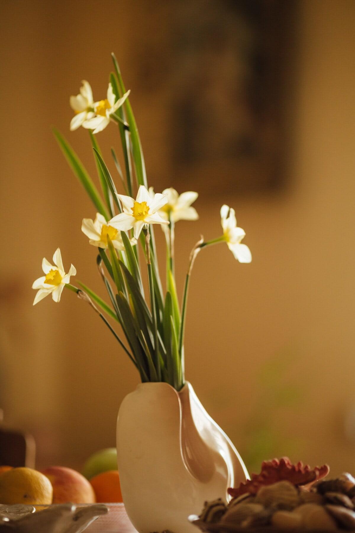 daffodil, vase, interior decoration, still life, narcissus, nature, blossom, plant, spring, flower