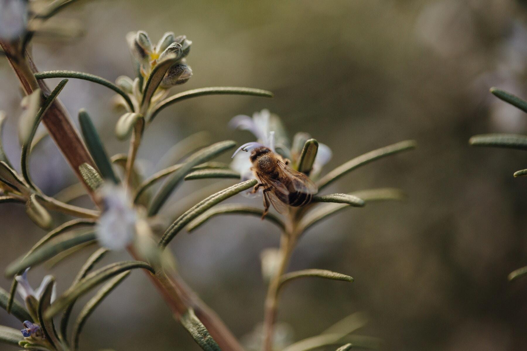 квітник, Бджола, медоносних бджіл, запилювачів, Пилок, ароматичні, запилення, рослина, членистоногих, павукоподібних