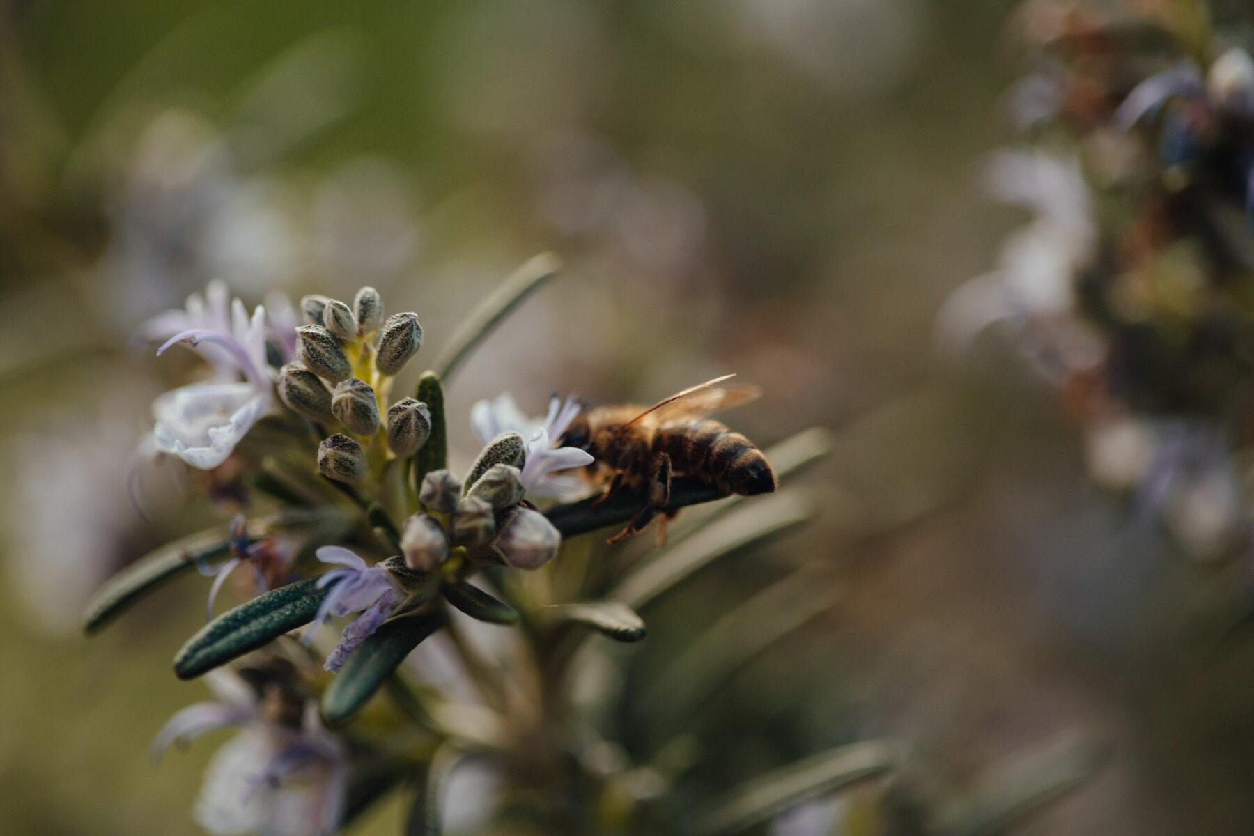 宏, 迭, 野花, 近距离, 蜜蜂, 蜜蜂, 授粉, 花蜜, 花粉, 模糊