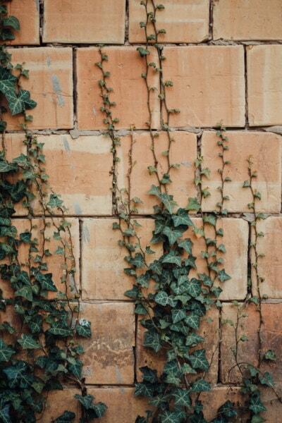 břečťan, bylina, listy, zeď, textura, zdivo, špinavý, Visací zámek, grunge, zámek