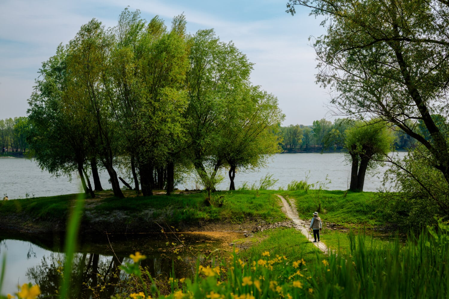 riverbank, spring time, hiker, nature, landscape, fair weather, lake, river, plant, willow