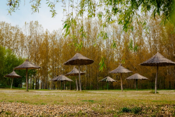beach, parasol, spring time, grass, tree, wood, nature, leaf, summer, landscape