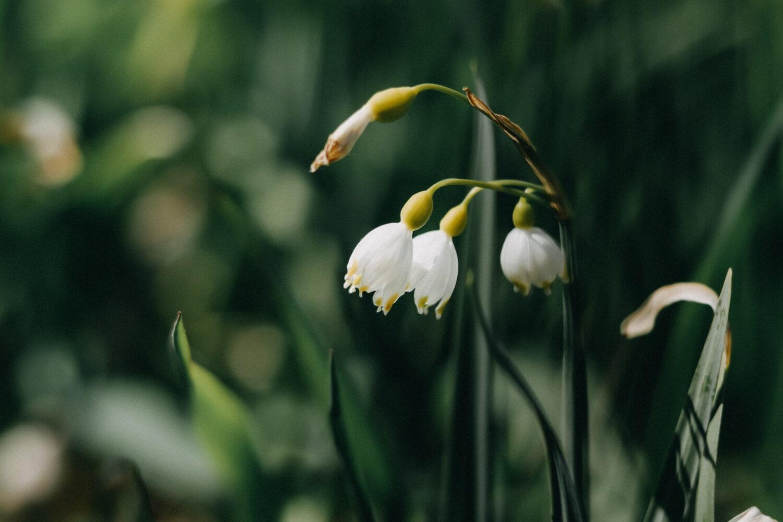 ดอกไม้สีขาว, เวลาฤดูใบไม้ผลิ, โรงงาน, ดอกไม้, ธรรมชาติ, ใบไม้, สภาพอากาศที่ยุติธรรม, สวน, ฟลอรา, กิจกรรมกลางแจ้ง