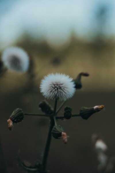 wildflower, stem, close-up, willow, flower, tree, herb, plant, blur, nature