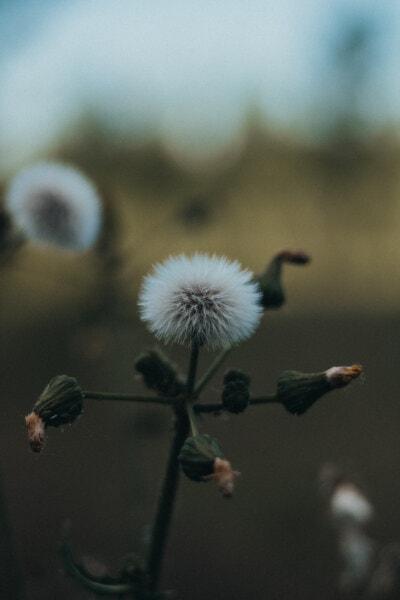 Wildblumen, Stamm, aus nächster Nähe, Weide, Blume, Struktur, Kraut, Anlage, verwischen, Natur