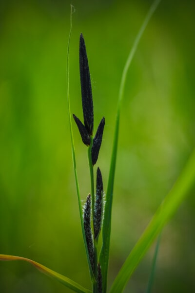 grass, straw, stem, bud, close-up, flora, nature, leaf, plant, summer