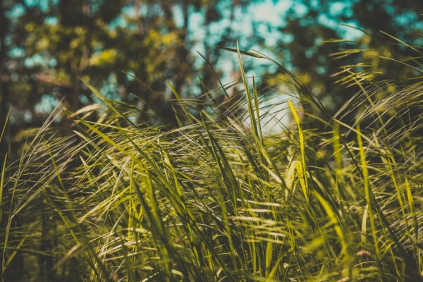 field, plant, outdoors, nature, grass, summer, fair weather, leaf, bright, flora