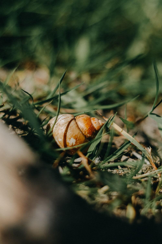 escargot, fermer, herbe, nature, brouiller, à l'extérieur, alimentaire, feuille, jardin, invertébré