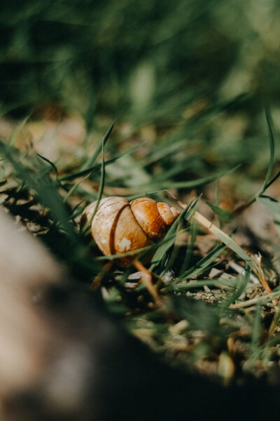 snail, close-up, grass, nature, blur, outdoors, food, leaf, garden, invertebrate