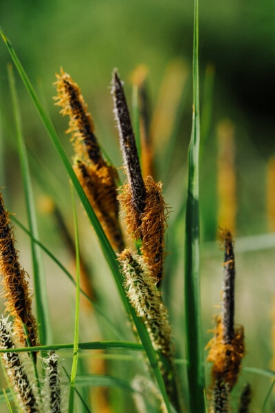 grass plants, grass, close-up, wildlife, straw, nature, summer, outdoors, fair weather, leaf