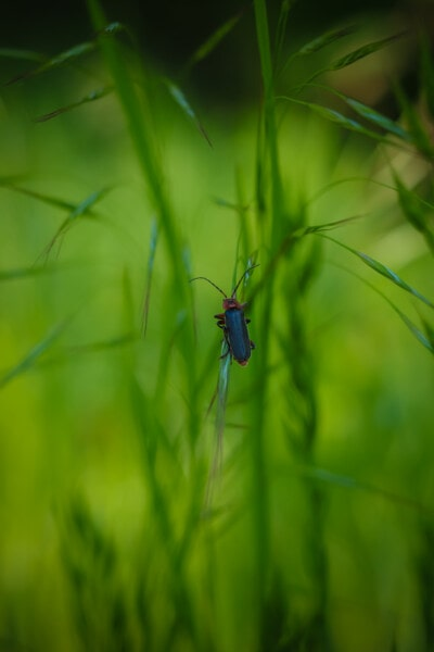 insect, beetle, green grass, grass, arthropod, nature, summer, garden, biology, leaf