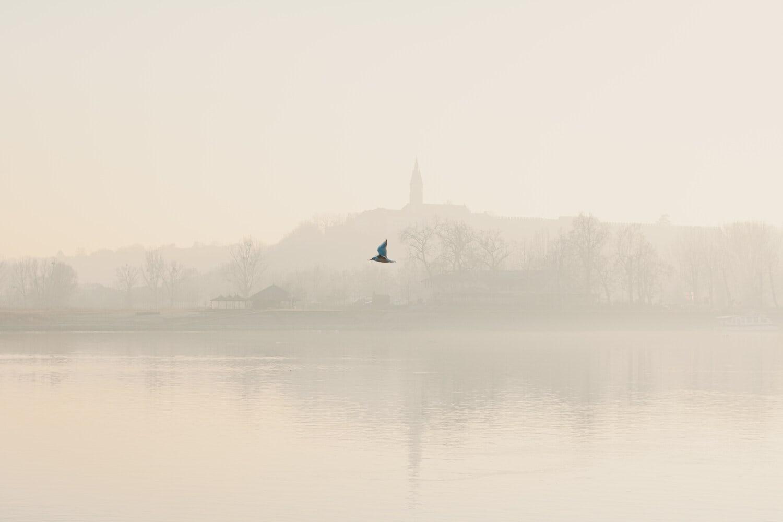 Nebel, Morgen, fliegend, Möwe, Landschaft, Fluss, Reflexion, Nebel, Wasser, See