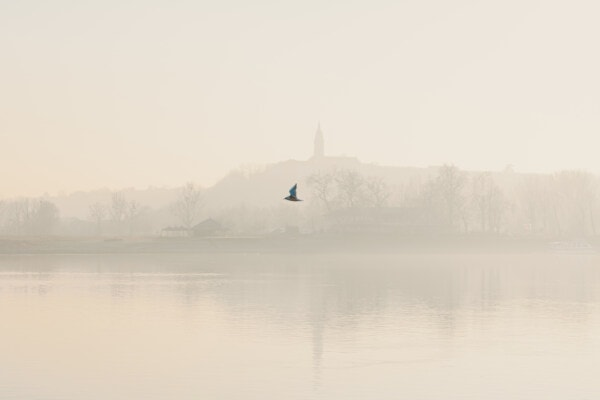 fog, morning, flying, seagull, landscape, river, reflection, mist, water, lake