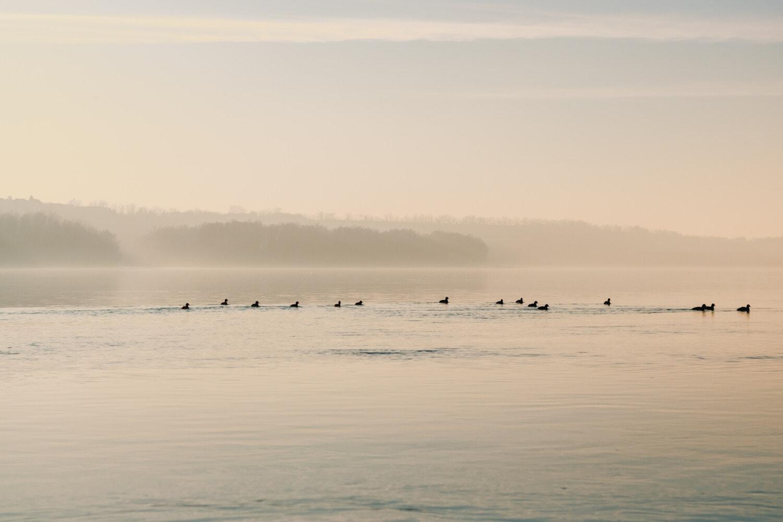 waten Vogel, Morgen, Schwimmen, Herde, Fluss, Wasser, am Meer, Strand, Natur, Vogel