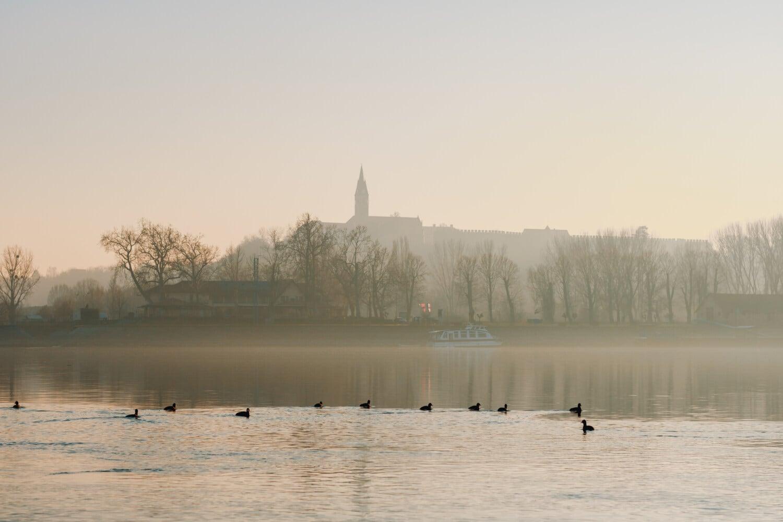 oiseaux, matin, bateau de rivière, troupeau, brumeux, rivière, brume, eau, aube, Lac