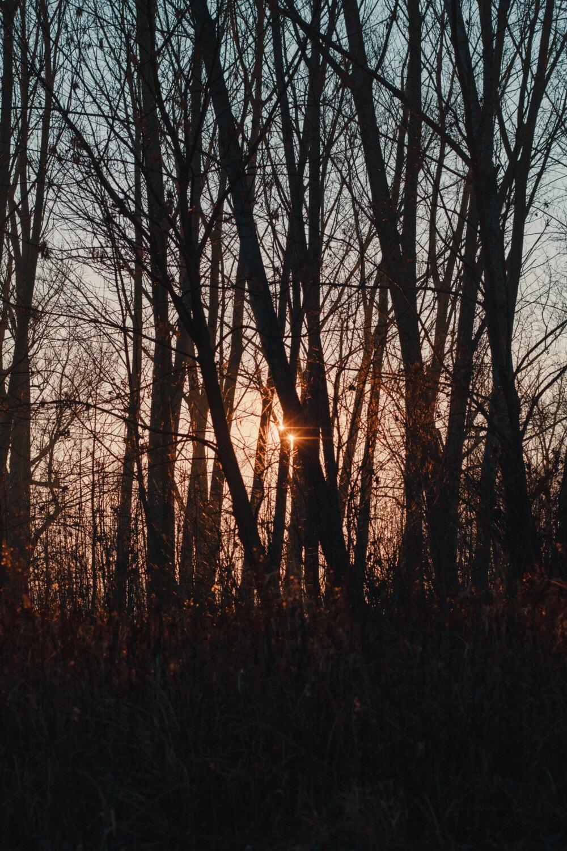 forêt, arbres, lever du soleil, lumière du soleil, brouillard, paysage, aube, arbre, brume, coucher de soleil