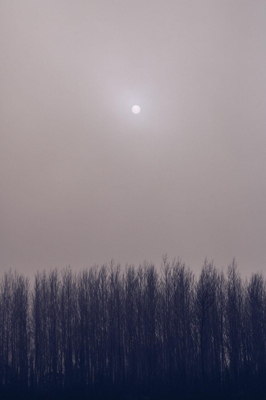 soare, petelor solare, ceaţă, pădure, gri, copac, copaci, peisaj, atmosfera, natura
