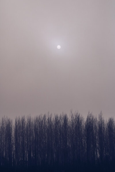 sun, sunspot, fog, forest, grey, tree, trees, landscape, atmosphere, nature