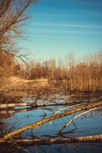 秋天, 沼泽, 秋天季节, 树, 性质, 湿地, 森林, 黎明, 湖, 日落