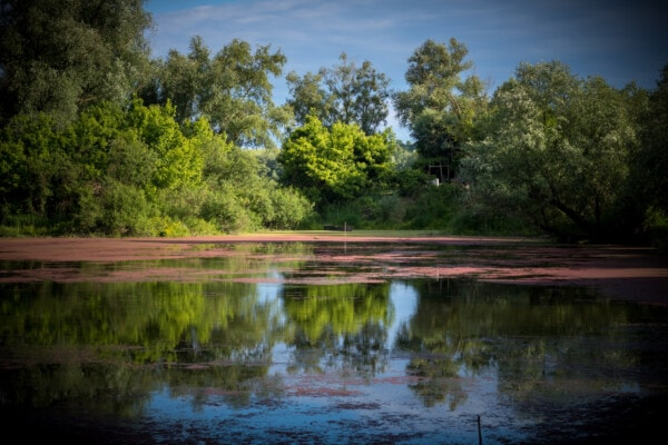 idyllic, swamp, lake, aquatic plant, landscape, tree, forest, reflection, wetland, water