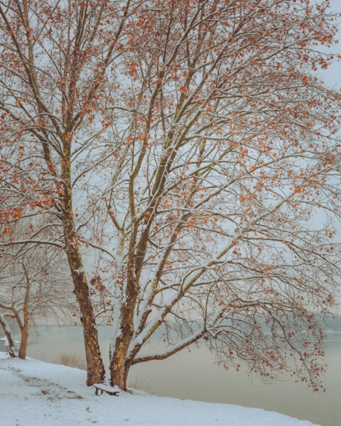 tree, cold, snow, riverbank, frozen, winter, trees, branch, landscape, forest