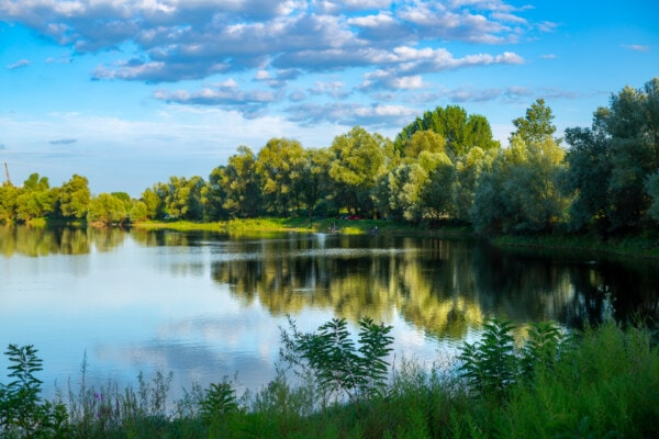 greenery, spring time, lakeside, fair weather, blue sky, idyllic, reflection, forest, water, landscape