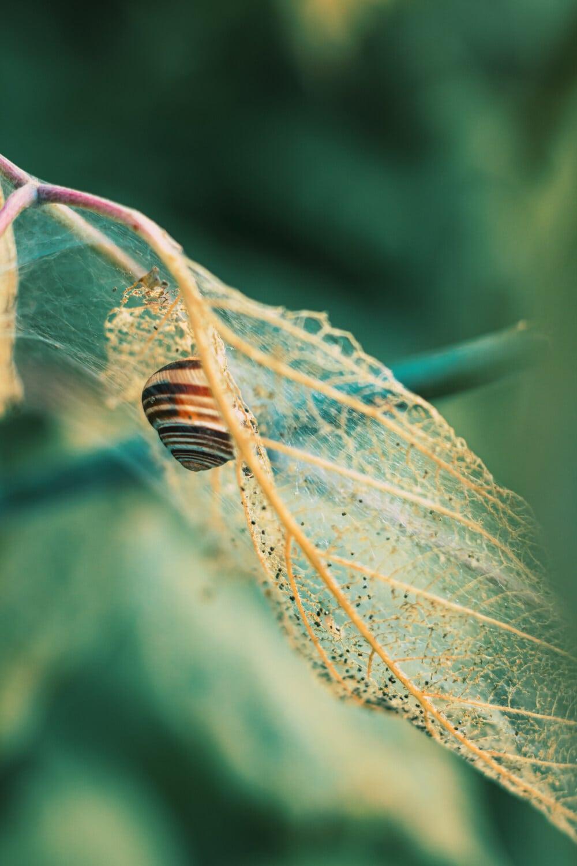 escargot, fermer, saison sèche, en détail, feuille, nature, jardin, faune, animal, à l'extérieur