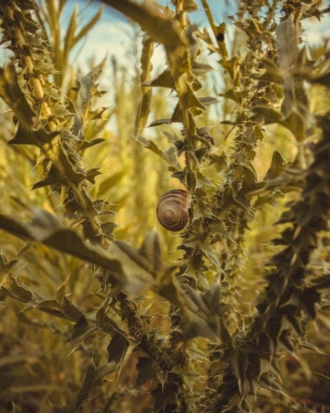 Улитка, колючка, зеленые листья, трава, завод, сад, природа, флора, лист, текстура
