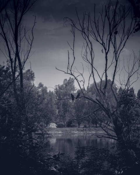 black and white, swamp, tree, tree house, birds, nature, trees, dawn, wetland, forest