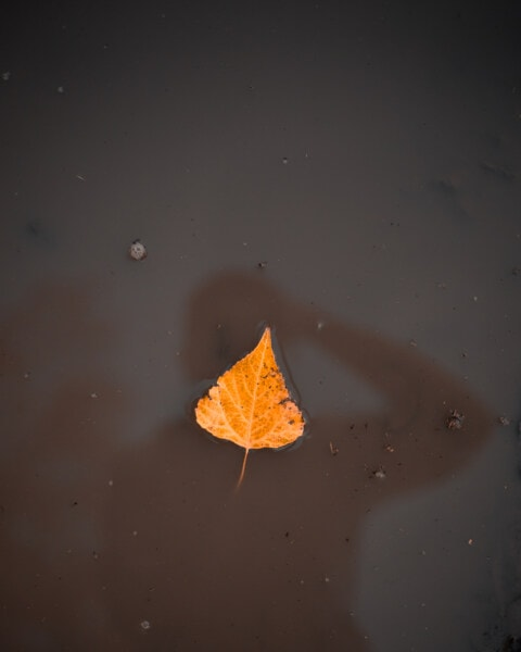 dry, leaf, floating, silhouette, water, shadow, nature, reflection, landscape, yellow