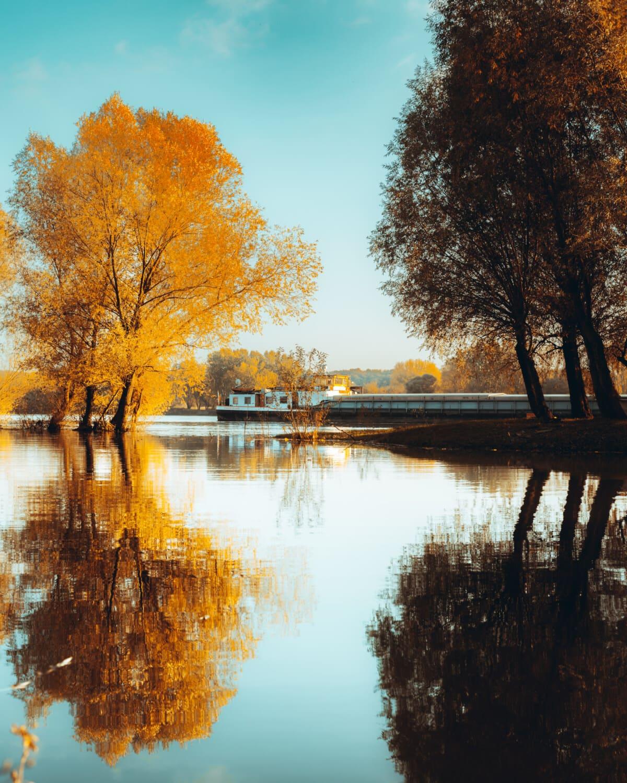 cargo ship, barge, transportation, riverbank, landscape, tree, autumn, forest, water, lake