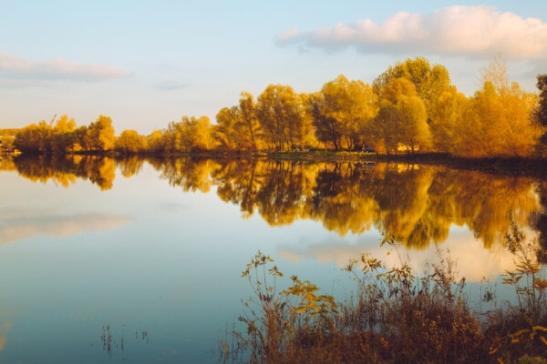 autumn season, lake, reflection, calm, majestic, golden glow, dawn, landscape, sunset, water