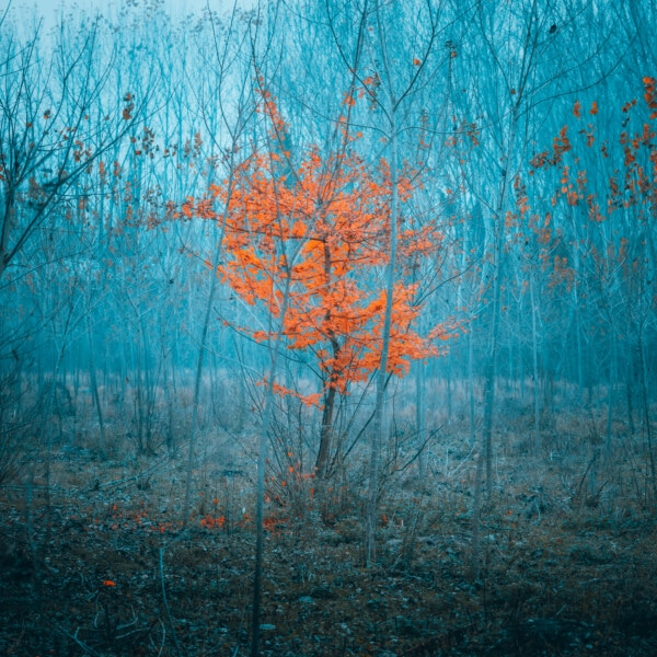 forest, tree, poplar, wood, winter, retro, nature, old, color, abstract