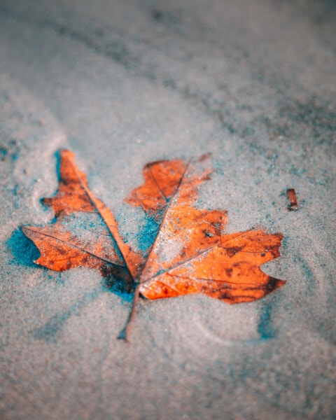 dry season, sand, maple, leaf, close-up, leaves, autumn, texture, abstract, color