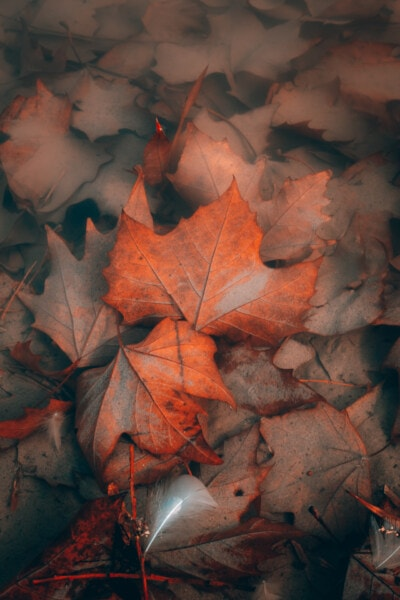 underwater, mud, orange yellow, dry, leaves, sand, autumn, maple, leaf, art