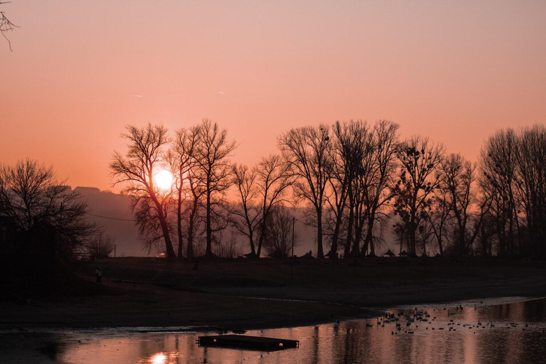 lever du soleil, crépuscule, au bord du lac, silhouette, troupeau, ombre, oiseau échassier, arbre, brouillard, aube