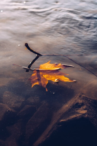 dry, leaf, water, floating, autumn season, lake, reflection, river, nature, landscape