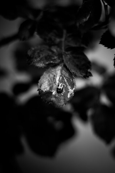 black and white, leaf, grey, nature, monochrome, art, color, dark, tree, portrait