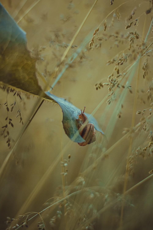 snail, green leaf, hanging, grassy, nature, landscape, light, invertebrate, animal, wildlife