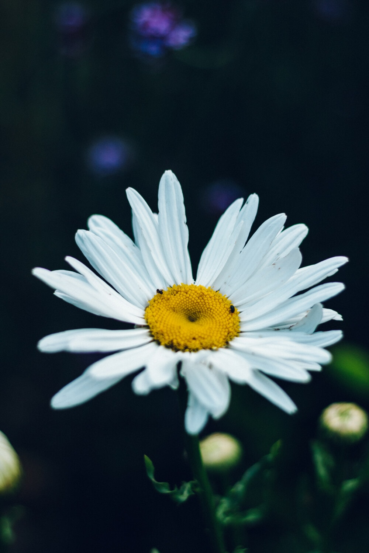 fleur blanche, fermer, pollen, blanc, pétales, printemps, plante, été, fleur, fleur