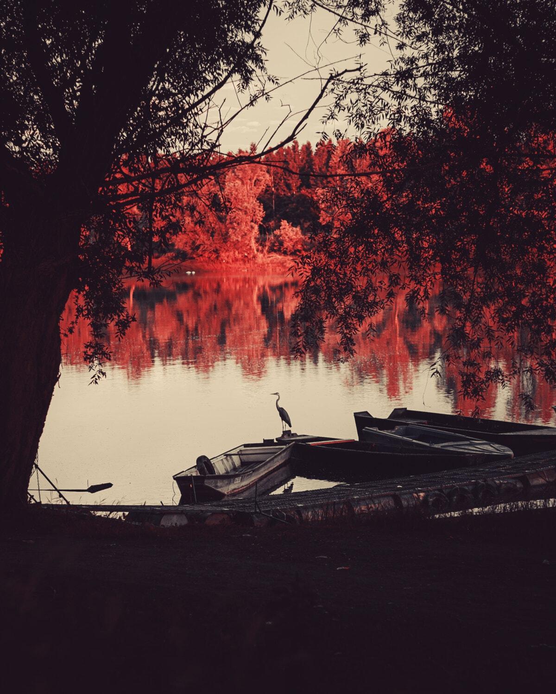 uccello, grigio, Airone, stagione autunnale, Costa, Barche, Alba, riflessione, tramonto, Lago