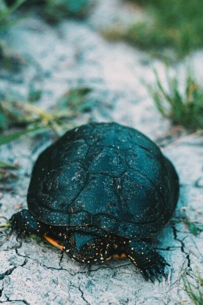 zblízka, hlava, plaz, želva, příroda, venku, divoká zvěř, list, léto, pěkného počasí
