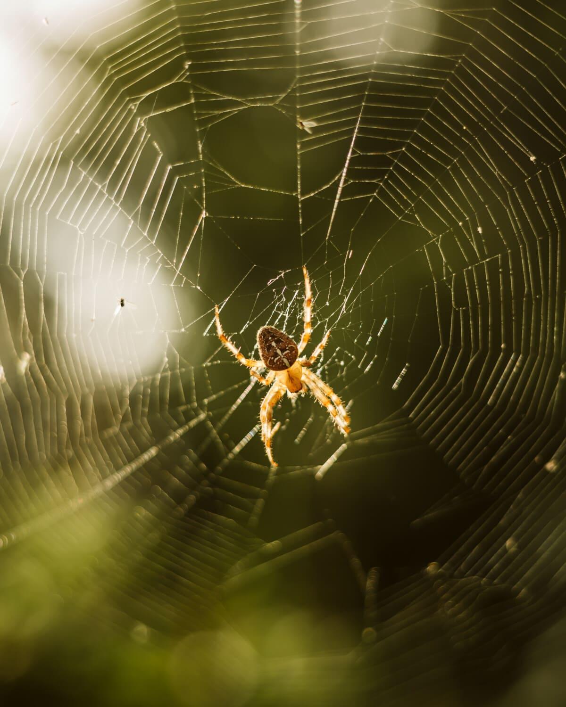 paučina, pauk, zamka, pozadinsko svijetlo, paukova mreža, paučnjak, paukova mreža, opasnost, web, kukac