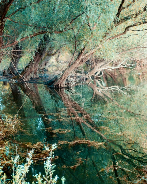 swamp, trees, aquatic plant, reflection, tree, nature, water, wood, old, outdoors