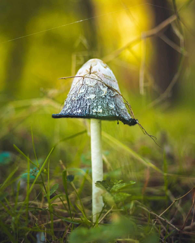 Pilz, Pilz, Spore, aus nächster Nähe, Stamm, Moos, Gras, Natur, Sommer, wild