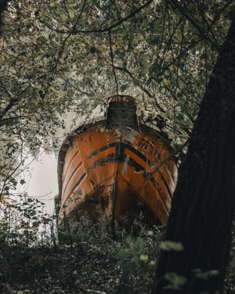 fishing boat, boat, trees, branch, coast, outdoors, old, abandoned, nature, wood