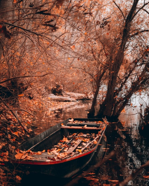 autumn, boat, abandoned, riverbank, tree, trees, forest, river, water, nature