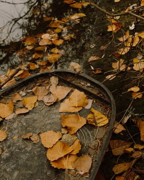 suché, listy, říční loď, břehu řeky, loď, pobočky, podzim, dřevo, plaz, příroda