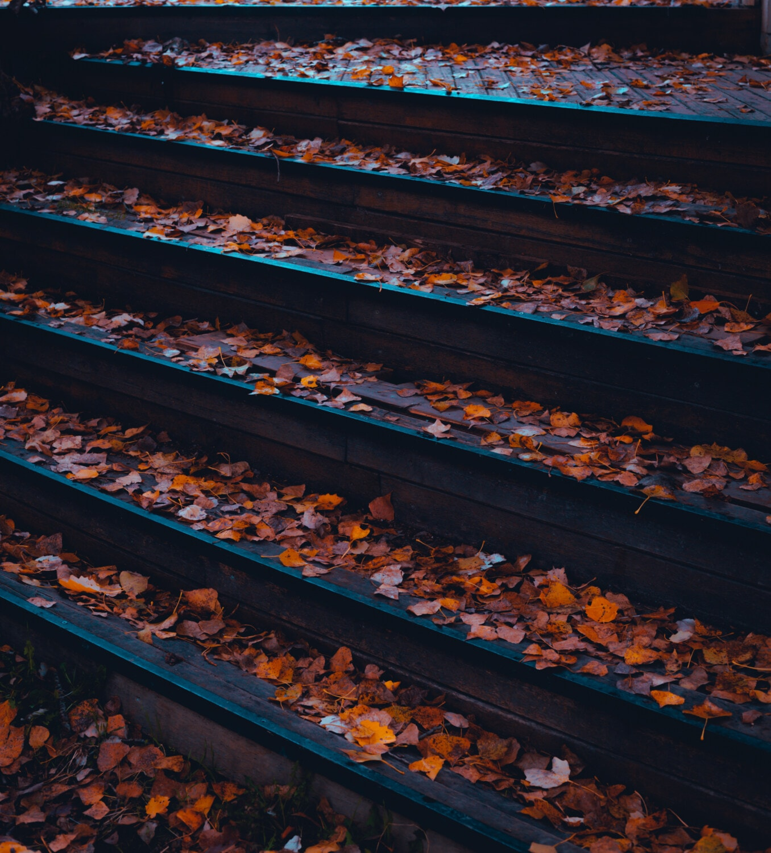 aus Holz, Treppen, nass, Herbst, Blätter, trocken, im freien, Muster, Natur, Textur